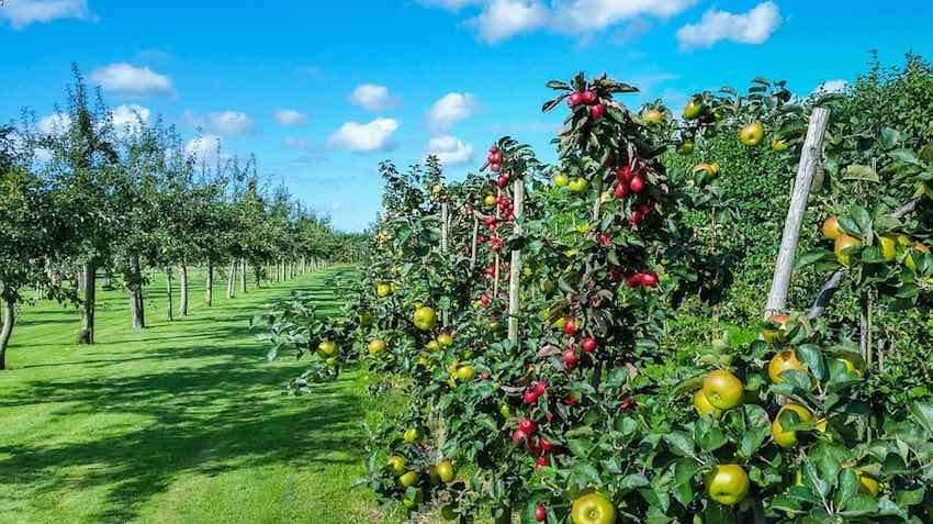 horticultura ibm argentina blockchain
